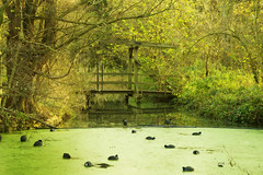 "A wooden bridge at the ""cood's paradise""_ (Roland B43) Tags: cood meerkoet madestein denhaag thehague netherlands woodenbridge houtenbrug minolta rokkor md 35105mm vintagelens"