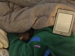 339/366 (moke076) Tags: 2016 365 366 project366 project 365project project365 oneaday photoaday vsco vscocam cell cellphone iphone mobile kindle book ereader tommy cat animal grey gray tabby snuggled bed linen duvet patagonia snuggle fleece winter