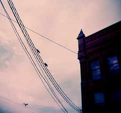 """""""One for sorrow, Two for luck; (or mirth) Three for a wedding, Four for death"""" (liquidnight) Tags: film birds analog mediumformat portland holga lomo lomography purple watching toycamera surreal powerlines urbanwildlife pacificnorthwest pdx dreamy perched analogue crows vignetting pnw dreamscape nurseryrhyme filmphotography 120cfn corvids oneforsorrow lomochrome lomochromepurple lomochromepurplexr100400"""