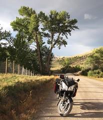 In Montana. (montanatom1950) Tags: trees motorcycle suzuki dl650 vstrom helenamontana