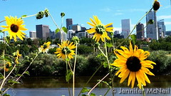September 2, 2015 - Late summer flowers in Denver. (Jennifer McNeil)