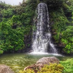 #şelale #waterfalls #jejuisland #jeju #korea #southkorea #waterfall #doğa #nature #bahar #yaz #summer #spring #huzur #barış #peace #relax #tayfungol #green #yeşil #water #su #season #seasons #mevsim #mevsimler