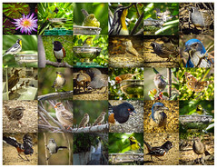 October in Los Angeles 2015 collage (pekabo90401) Tags: canon october friendship birdwatching lightroom lifer madronamarsh southerncaliforniabirds ballonafreshwatermarsh lifebird westernfoundationofvertebratezoology vancestreet sx50 lightroomcollage canonsx50 birdwatchinglosangeles pekabo90401 pacificpalisadesbirds birdsofmadronamarsh birdsofballona octoberinlosangeles