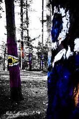 miradas perdidas (Inigo Montes .) Tags: naturaleza tree nature forest arbol eyes colours magic colores ojos bosque oma basque euskalherria euskadi basquecountry ibarrola magico miradas encantado urdaibai koloreak kortezubi