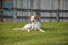 ris (henriiqueprado) Tags: iris dog nature farm natureza explore fazenda nikond3200 expressyourself