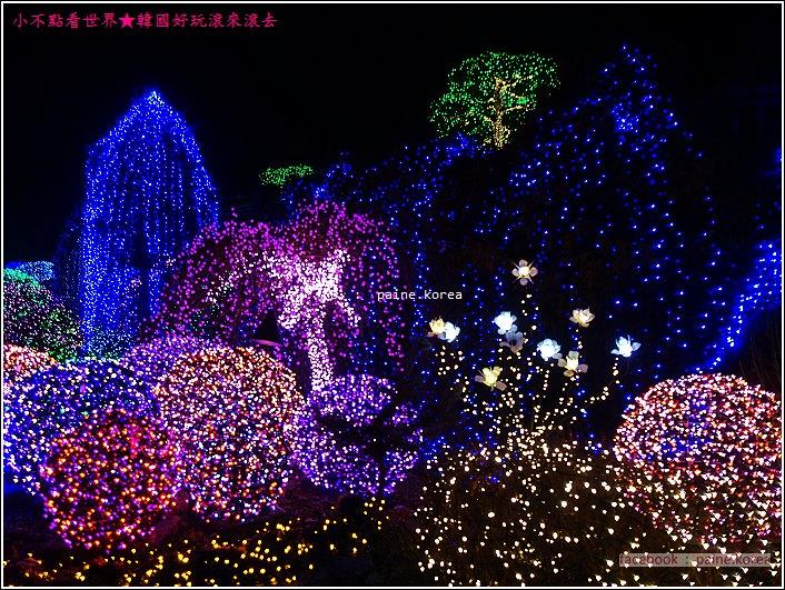 晨靜樹木園 五色星光庭園展 (44).JPG