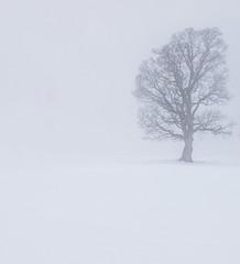 lonely trees (elzauer) Tags: nature winter kaprun austria austrianculture beautyinnature coldtemperature day europeanalps fog frost landscape outdoors photography salzburg salzburgerland skiresort snow snowfield tranquility tree