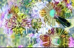 Papillon (Sebmanstar) Tags: couleur color creative creatif creation research pentax photography image imagination imagine art work transformed europe europa france french original light