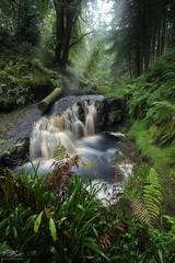 Depths of Northumberland (Steve Clasper) Tags: kielderforestdrive northumberland forest log waterfall trail riverrede northern north uk steveclasper autumn hindhopelinn