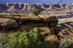 Find the Snake! (grbenson3) Tags: buckcanyon canyonlands desertsouthwest islandinthesky moab utah rattlesnake snake eagle canyon mesa cliffs desert trees dry arid