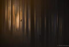 Birdman (petrisalonen) Tags: forest dream creepy birds sunset sunrise trees landscape photoart art finland nature