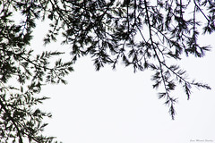 IMG_8339 (Juan Manuel Sanchez) Tags: otoo adrianospicture juanmanuelsanchez hojas arce rojo niebla fog campo montaa madrid espaa canon d60 naturaleza maana cielo silueta contraluz cesped hierba bosque norte