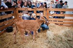 (anto291) Tags: vitello cagnessurmer châtaigne fêtedelachâtaigne festadellacastagna castagna