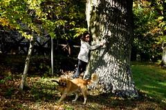 Laura & Kevin (Franco Vannini) Tags: madonnadelfaggio tuscany toscana beech oak faggio quercia autunno goldenretrievers
