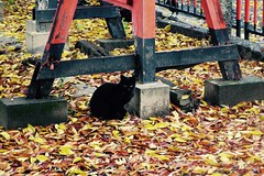 Today's Cat@2016-11-23 (masatsu) Tags: cat thebiggestgroupwithonlycats catspotting pentax mx1