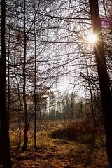 be sure inside of you (A.Ciepielewska) Tags: outdoor landscape trees tree drzewa forest plant sky sun sunshine shine bright polska poland polishphoto polishgirl fullframe fx nikon nikond610 nikon610 shadow wiatocie wiato light natura nature naturelovers lubelskie autumn jesie