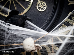 Crow and Skull (marcotte_normand) Tags: britishcolumbia canada events oakbay places vancouverisland victoria hallowen