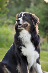 DSC_0090 (Kristin Olsson) Tags: dog outdoor portrtt