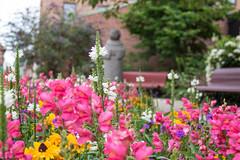 Flower (Infomastern) Tags: ystad blomma bnch bnk flower hbm