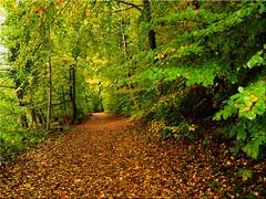 Autumn at the Lake Uklei (Ostseetroll) Tags: deu deutschland geo:lat=5418251619 geo:lon=1062915116 geotagged schleswigholstein sielbeck ukleisee herbst autumn bume trees laub leaf autunmnleafcolor