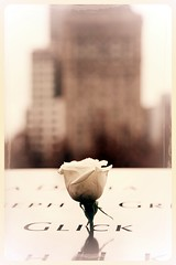 BIRTHDAY (mark.aizenberg) Tags: urban outdoor nyc new york memorial 911 september11 terror memory birthday rose white flower newyork national thanksgiving depthoffield blackandwhite monochrome