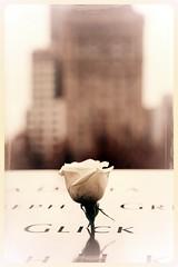 BIRTHDAY (mark.aizenberg) Tags: urban outdoor nyc new york memorial 911 september11 terror memory birthday rose white flower newyork national thanksgiving depthoffield blackandwhite monochrome