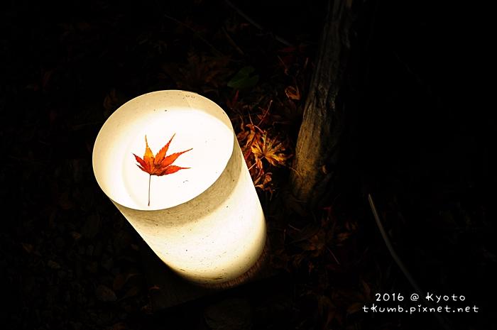 2016醍醐寺夜楓8.JPG