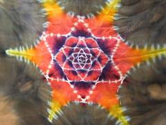 psychedelic sacred geometry tiedye for your daily life (asiadyer) Tags: japan japanese japanerse japanetsy tiedye textile silk itajime shibori shiboripsychedelic psychedelic psychedelica hempleaf mandala mandalatiedye mangekyo symmetry dyed dye dyeing
