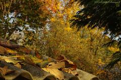 Pensive Autumn (Natali Antonovich) Tags: pensiveautumn autumn tervuren belgium nature harmony
