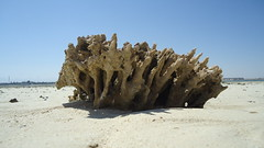 Red Sea coral (lebensbaum30) Tags: beach coral strand tiere nationalpark fishing sand meer sony redsea dive egypt august playa landschaft stein elmar gypten hurghada sandbank taucher naturschutzgebiet tauchen 2015 rotesmeer koralle unterwasserwelt meerestiere sandfarben dscw330 sommer2015 tiereimnaturschutzgebiet naturschauschpiel
