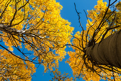 A golden canopy above the forest
