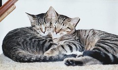 2 Cats - 3 Ears (Stabbur's Master) Tags: cats cc200 cc100