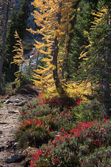 20151003-IMG_9877 (Ken Poore) Tags: washington hiking cascades larches northcascades geolocation maplepassloop geocity camera:make=canon exif:make=canon goldenlarches geocountry geostate exif:lens=ef24105mmf4lisusm exif:focallength=105mm exif:aperture=ƒ80 exif:model=canoneos6d camera:model=canoneos6d exif:isospeed=200 geo:lat=48507701666667 geo:lon=12076660833333