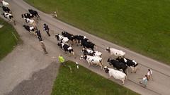 La désalpe gruérienne en vue aérienne (Pierre Schwaller (lyoba.ch)) Tags: suisse tradition agriculture drone gruyère piller phantom3 troupeau dji lacdelagruyère schwaller lyoba pontlaville pierreschwaller lyobach