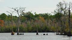 LANDSCAPE (t.rex7000) Tags: landscape alabama bayou swamp trex7000