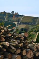 fDSC_1912A (m.genca) Tags: italy green italia wine alba country campagna piemonte autunno canale outumn piemount