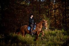 Vro (Arnaud Klinger) Tags: horse studio cheval nikon sigma chevaux profoto d810
