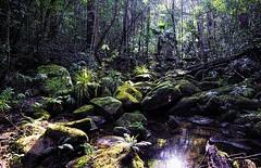 Sunlight in the Rainforest (Arcus Cloud) Tags: trees light shadow reflection green nature water creek forest reflections dark moss flora rainforest rocks shadows australia nsw centralcoast lightandshadow lightanddark waterreflection waterreflections australianrainforest stricklandstateforest