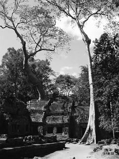 Angkor Wat 2004