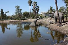 Bubbling pre-historic pit (maxj75) Tags: la losangeles ca california losangelescounty labreatarpits labrea tarpits volcano filminglocation movielocation volcanothemovie museum iceage mastodon