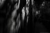 EXPO MILANO 2015   Austria (GAZ BLANCO photographer) Tags: life leica wood people blackandwhite bw italy terrain food monochrome architecture forest landscape austria team expo milano air breath vietnam oxygen eat planet breathe paysage aria vita pavillon bosco meltingpot clima noireetblanc ecologic bwportraits streetstyle streettags streetphotographybw expo2015 bwcontest expo2015milano streetphotobw flickrtravelaward igmasters bwoftheday bwstylesgf streetstylesgf bwmasters bwsociety instapickbw instabw streetwalker069 loenhart streetfav respiraaustria orgoglioexpo