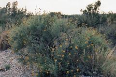 1994 USA // New Mexico  // (maerzbecher-Deutschland zu Fuss) Tags: usa newmexico 1994 maerzbecher