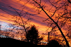 hasad a hajnal / dawn (debreczeniemoke) Tags: morning winter red sky tree dawn ég fa baiamare hajnal tél reggel vörös nagybánya olympusem5