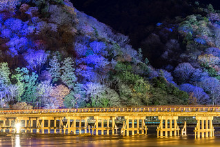 渡月橋 - 嵐山花灯路 / Arashiyama Hanatouro