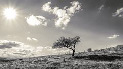 Hero.. (drstar.) Tags: sky sunlight tree classic monochrome clouds contrast flickr lonely minimalism flickrturkey nikond610