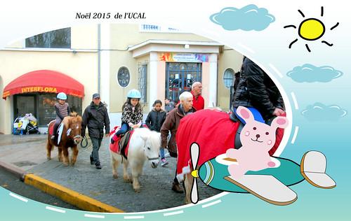 Manège & poneys (9)