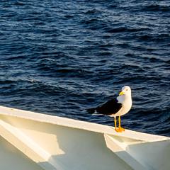 P7130194 (.: Sophie ][ Delaloye :.) Tags: princess maria baltic sea helsinki st petersburg boat cruise