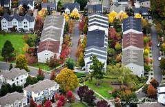 Fall Foliage on Beacon Hill 059 (longbachnguyen) Tags: seattle beaconhill georgetown washington fallfoliage autumn fallcolors landscape landscapephotography aerial aerialphotography aerialphotographer