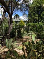 The Ruth Bancroft Garden (Earl Ruby) Tags: ruthbancroft theruthbancroftgarden walnutcreek cactus succulents aloe agave