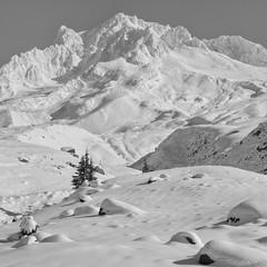 October Snow, Mt. Hood (Scott Withers Photography) Tags: paradiseparktrail mthood oregon sonyrx100